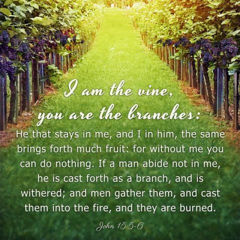 Bible Study—John 15:5-6